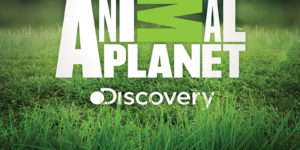 Discovery - Animal Planet